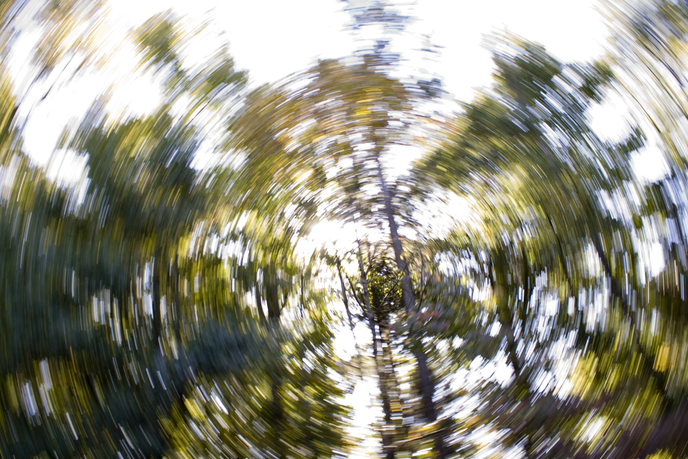 Spinning trees represent the sensation of having vertigo